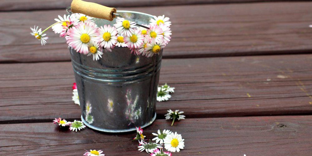 daisies-4220153_1920