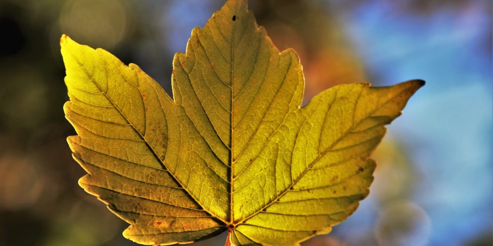 autumn-3707549_1920