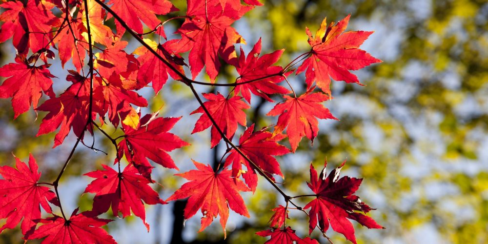 autumn-leaves-2789234_1920