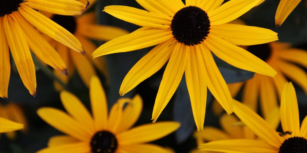 the-petals-4466259_1920