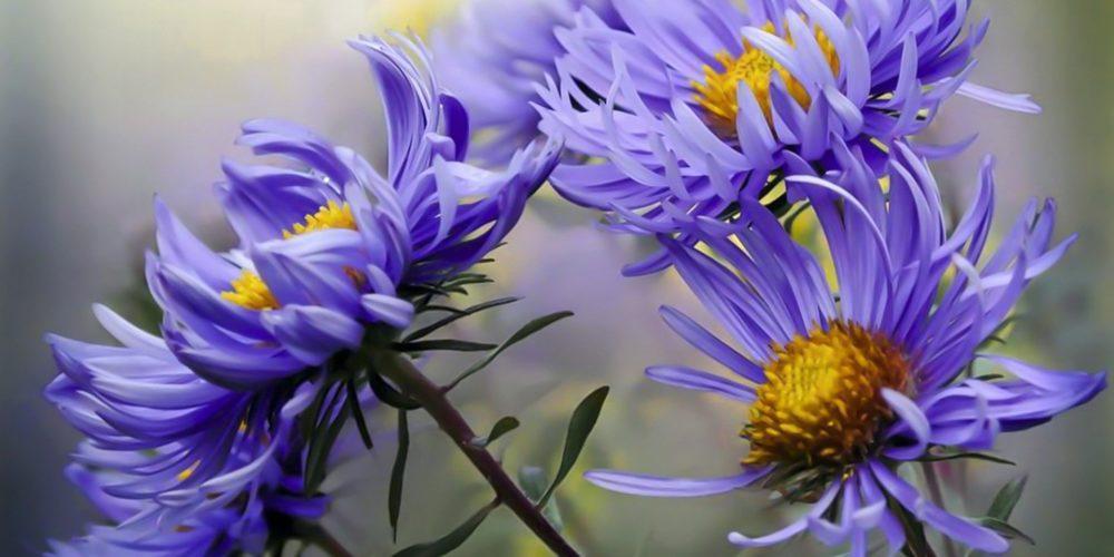 flower-4875471_1920