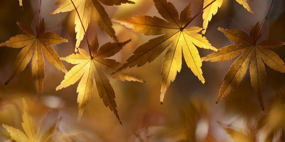 dried-leaves-4968705_1920
