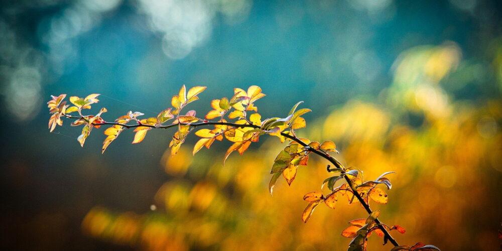 autumn-3846345_1920